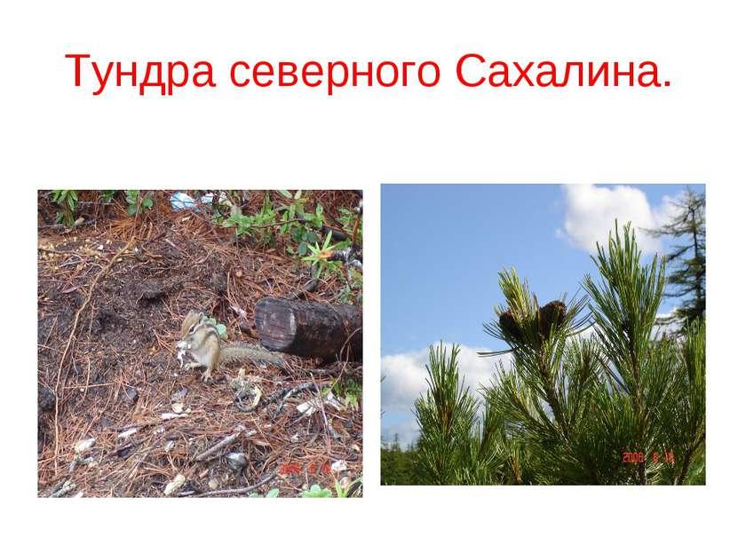 Тундра северного Сахалина.
