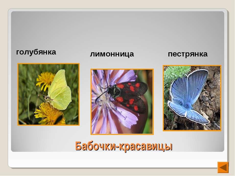 Бабочки-красавицы голубянка лимонница пестрянка