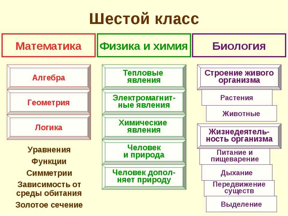 Шестой класс Уравнения Функции Симметрии Зависимость от среды обитания Золото...