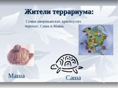 Жители террариума: Семья американских красноухих черепах: Саша и Маша. Саша Маша
