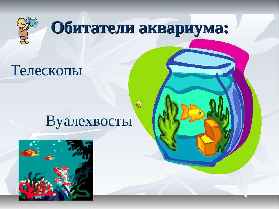 Обитатели аквариума: Телескопы Вуалехвосты