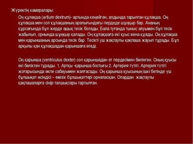 Жүректің камералары: Оң құлақша (artium dextrum)- артында кеңейген, алдында т...