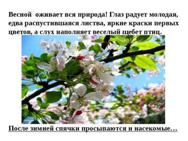 Весной оживает вся природа! Глаз радует молодая, едва распустившаяся листва, ...