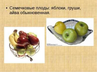Семечковые плоды: яблоки, груши, айва обыкновенная.