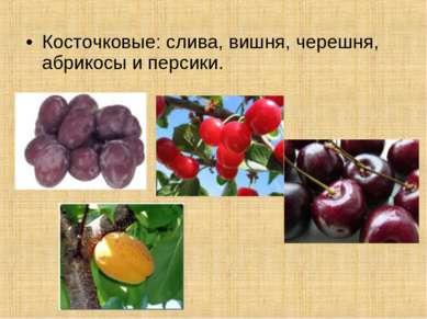 Косточковые: слива, вишня, черешня, абрикосы и персики.