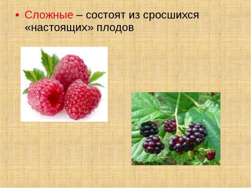 Сложные – состоят из сросшихся «настоящих» плодов