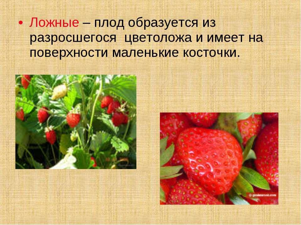 Ложные – плод образуется из разросшегося цветоложа и имеет на поверхности мал...
