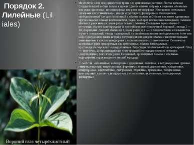 Многолетние или реже однолетние травы или древовидные растения. Листья цельны...