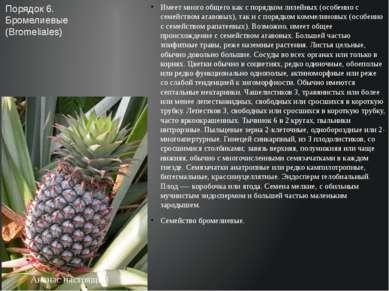 Имеет много общего как с порядком лилейных (особенно с семейством агавовых), ...