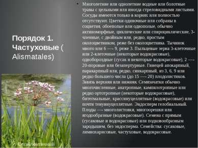 Многолетние или однолетние водные или болотные травы с цельными или иногда ст...