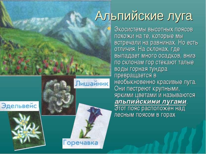 Альпийские луга Экосистемы высотных поясов похожи на те, которые мы встречали...