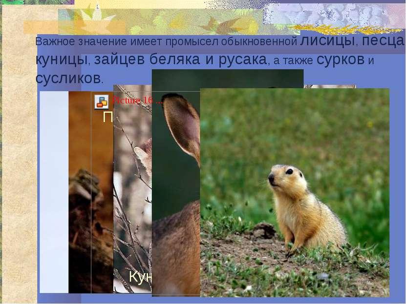 Важное значение имеет промысел обыкновенной лисицы, песца, куницы, зайцев бел...