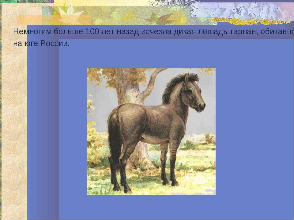 Немногим больше 100 лет назад исчезла дикая лошадь тарпан, обитавшая на юге Р...