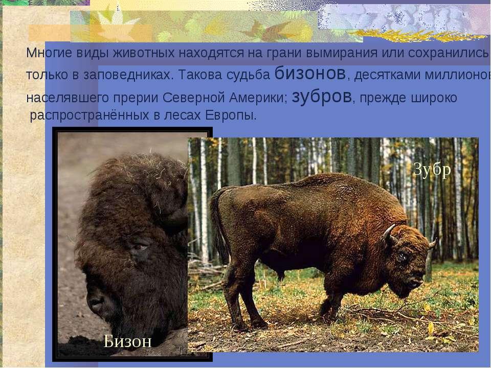 Многие виды животных находятся на грани вымирания или сохранились только в за...
