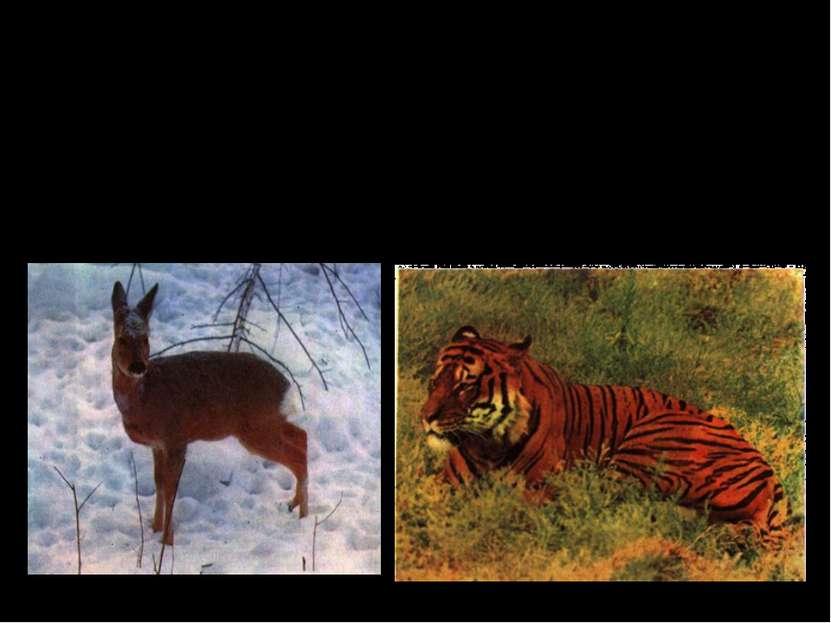 Но чем сложнее строение животных, тем реже свойственно им бесполое размножени...