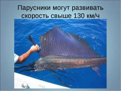 Парусники могут развивать скорость свыше 130 км/ч