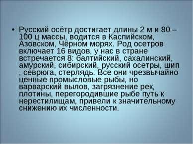 Русский осётр достигает длины 2 м и 80 – 100 ц массы, водится в Каспийском, А...