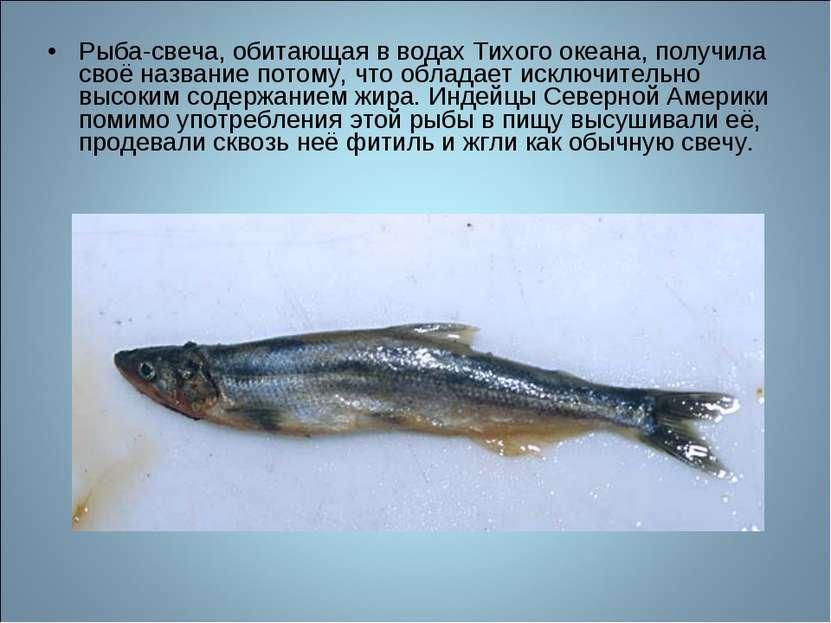 Рыба-свеча, обитающая в водах Тихого океана, получила своё название потому, ч...