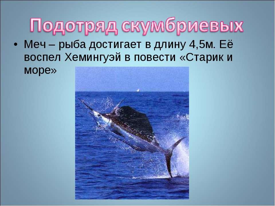 Меч – рыба достигает в длину 4,5м. Её воспел Хемингуэй в повести «Старик и море»