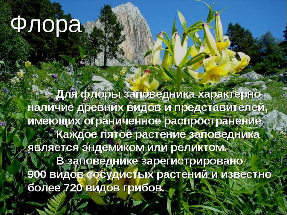 Флора Для флоры заповедника характерно наличие древних видов и представителей...