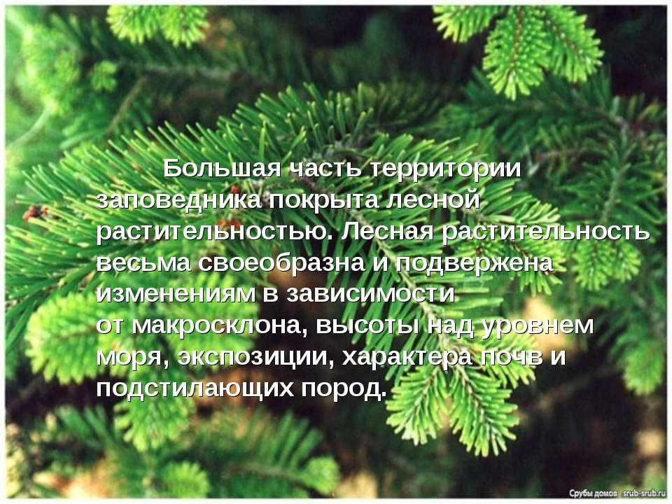 Большая часть территории заповедника покрыта лесной растительностью. Лесная р...