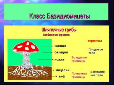 Класс Базидиомицеты Шляпочные грибы. Особенности строения: шляпка ножка мицел...