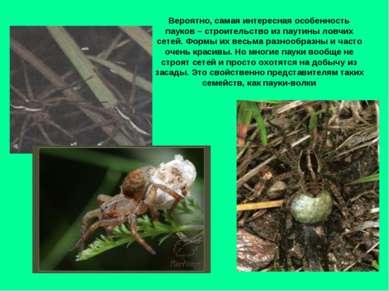 Вероятно, самая интересная особенность пауков – строительство из паутины ловч...