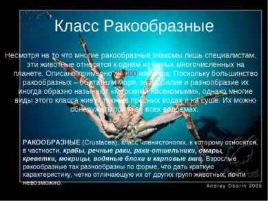 Класс Ракообразные РАКООБРАЗНЫЕ (Crustacea), класс членистоногих, к которому ...