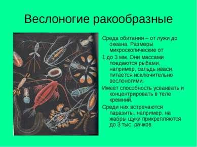 Веслоногие ракообразные Среда обитания – от лужи до океана. Размеры микроскоп...