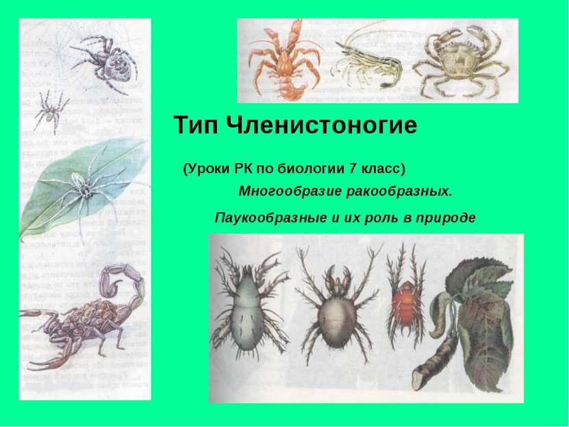 Тип Членистоногие (Уроки РК по биологии 7 класс) Многообразие ракообразных. П...