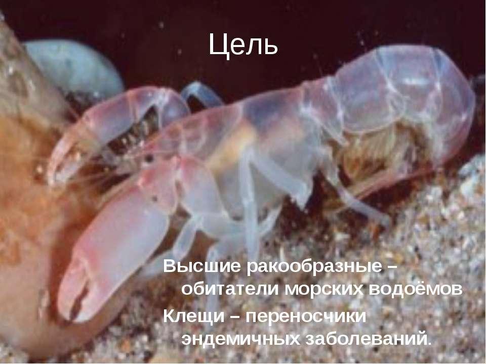 Цель Высшие ракообразные – обитатели морских водоёмов Клещи – переносчики энд...