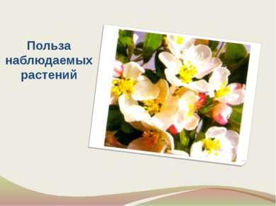 Польза наблюдаемых растений