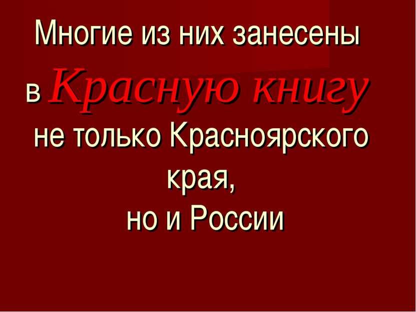 Многие из них занесены в Красную книгу не только Красноярского края, но и России