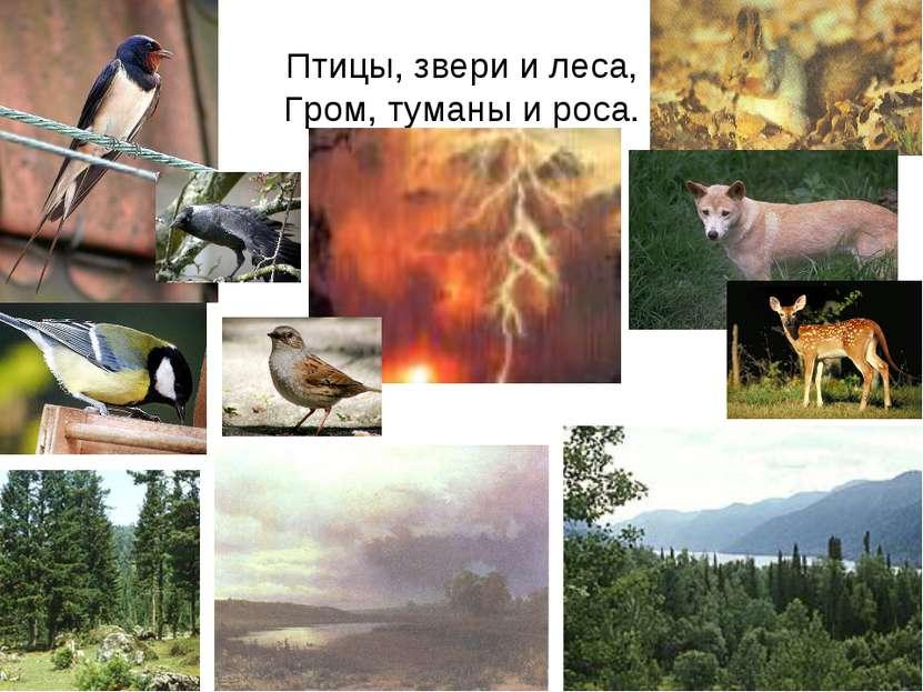 Птицы, звери и леса, Гром, туманы и роса.