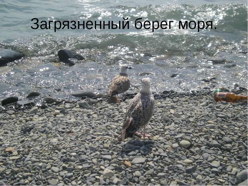 Загрязненный берег моря.