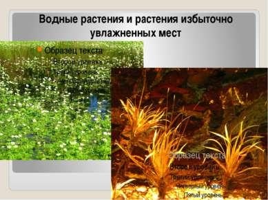 Водные растения и растения избыточно увлажненных мест