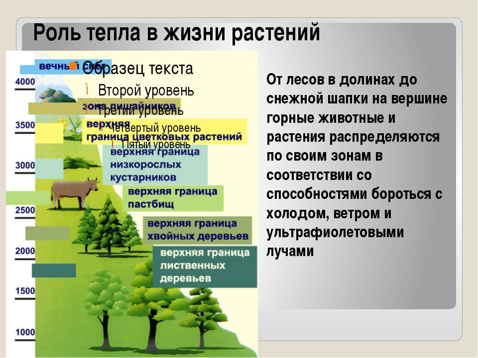 Роль тепла в жизни растений От лесов в долинах до снежной шапки на вершине го...
