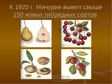 К 1920г. Мичурин вывел свыше 150 новых гибридных сортов