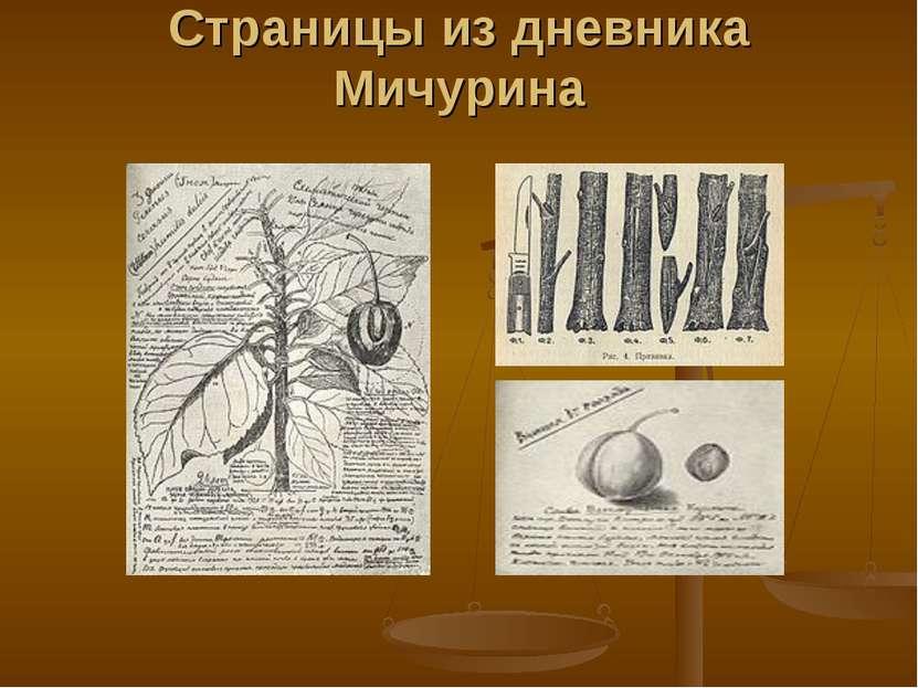 Страницы из дневника Мичурина