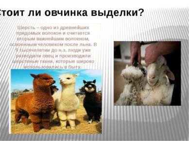 Стоит ли овчинка выделки? Шерсть – одно из древнейших прядомых волокон и счит...