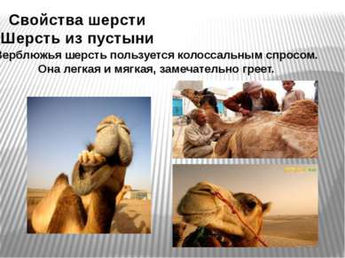 Свойства шерсти Шерсть из пустыни Верблюжья шерсть пользуется колоссальным сп...