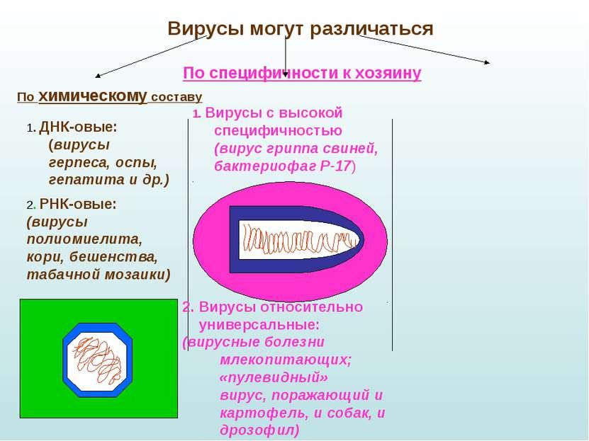 Вирусы могут различаться По специфичности к хозяину 1. Вирусы с высокой специ...