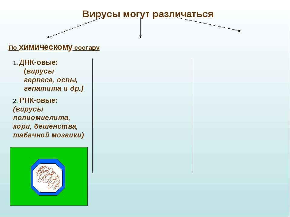 Вирусы могут различаться По химическому составу 1. ДНК-овые: (вирусы герпеса,...