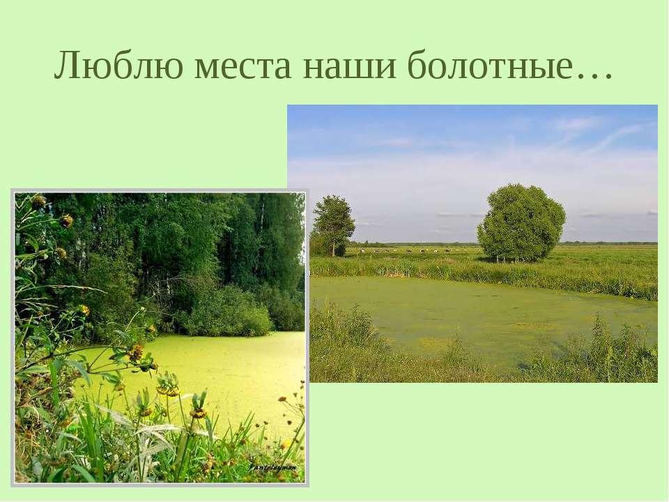 Люблю места наши болотные…