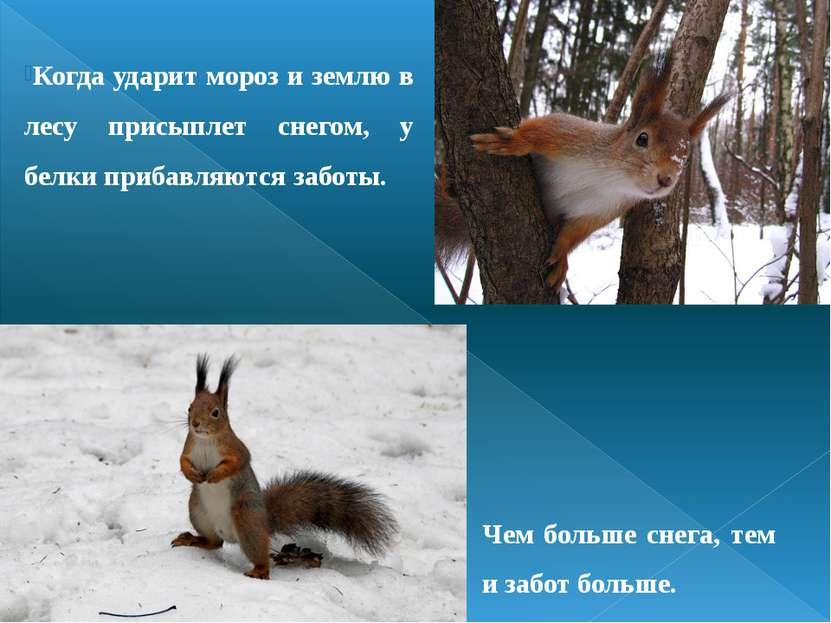 Когда ударит мороз и землю в лесу присыплет снегом, у белки прибавляются забо...