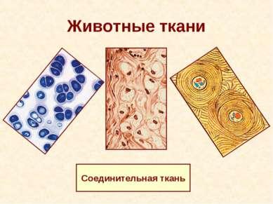 Животные ткани Соединительная ткань