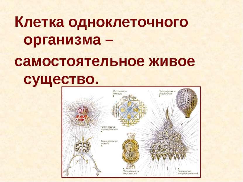 Клетка одноклеточного организма – самостоятельное живое существо.