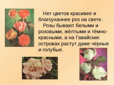 Нет цветов красивее и благоуханнее роз на свете. Розы бывают белыми и розовым...