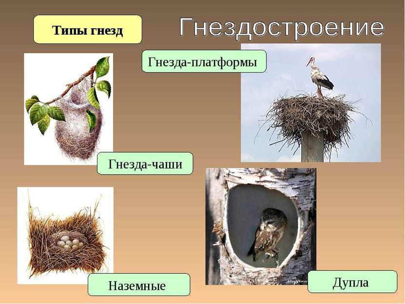Типы гнезд Наземные Гнезда-чаши Гнезда-платформы Дупла
