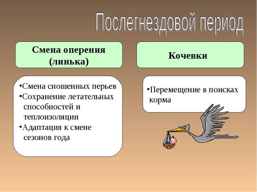 Смена оперения (линька) Кочевки Смена сношенных перьев Сохранение летательных...